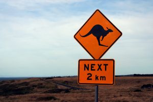 Australian Kangaroo Sign carwitter 300x200 - New Roads: Moving From The UK To Down Under - New Roads: Moving From The UK To Down Under