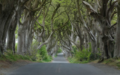 Dark Hedges near Armoy Co Antrim carwitter 400x251 - Why bigger isn't always better! Small car options suited to the roads of Northern Ireland - Why bigger isn't always better! Small car options suited to the roads of Northern Ireland